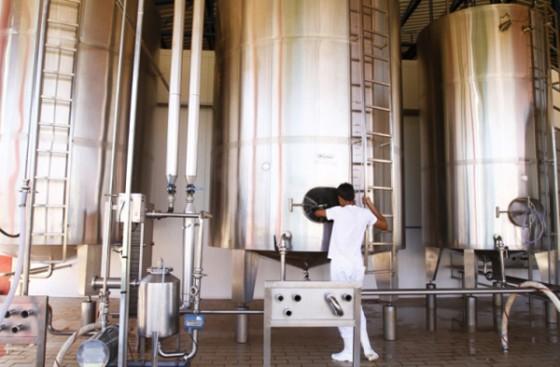 Cooperativa produz leite, queijo, iogurte e bebidas lácteas. | Foto: Roberto Custódio/Gazeta do Povo.
