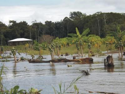 Cheias estragam as plantações da população ribeirinha, que apela para a criatividade