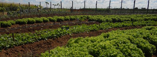 Rede Terra levará sua tecnologia agrícola a outros países por meio de convênio entre Fundação Banco do Brasil e FAO