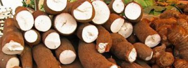 Além de fécula, Coopasub quer fazer outros derivados da mandioca como a farinha e a fécula azeda