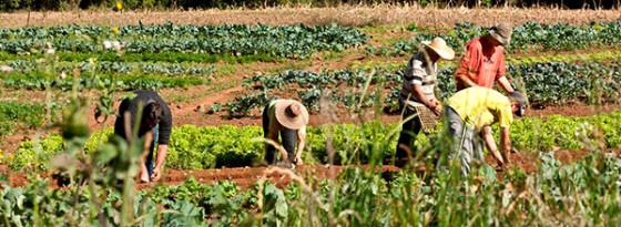 Agricultura Familiar é destaque em conferência. Foto: Tamires Koop/MDA