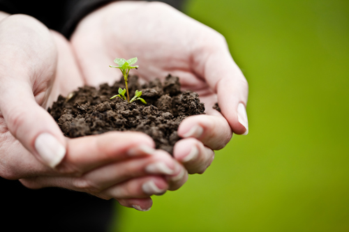SEBRAE_sustentabilidade
