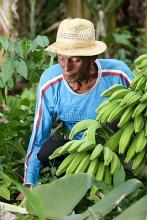agricultor com bananas