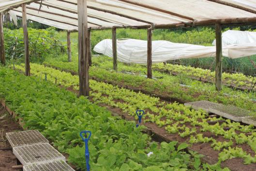 Plantação de um dos assentamentos parte da Cooperdotchi. Crédito: Blog Universo Magali