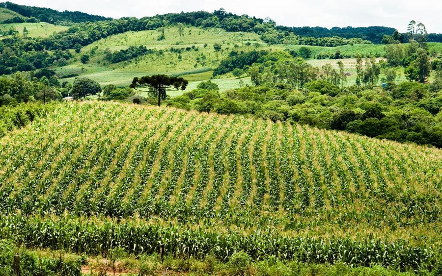 Governo Federal vai comprar 11,8 mil toneladas de alimentos da agricultura familiar